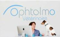 un chien accueilli à la clinique ophtalmo veterinaire de Montréal